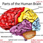 brain-dr.-Heshmati-.png